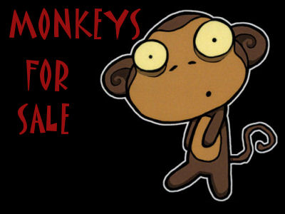 Monkeys For Sale