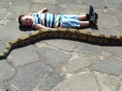 Pet Snake