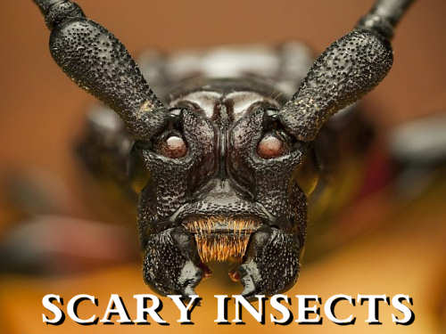 Scary Insects