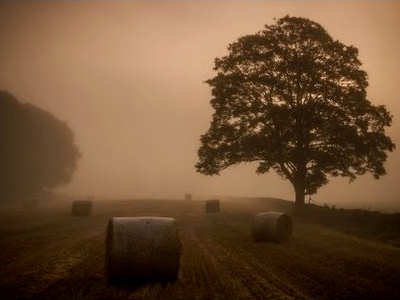 The Thing That Stalks The Fields